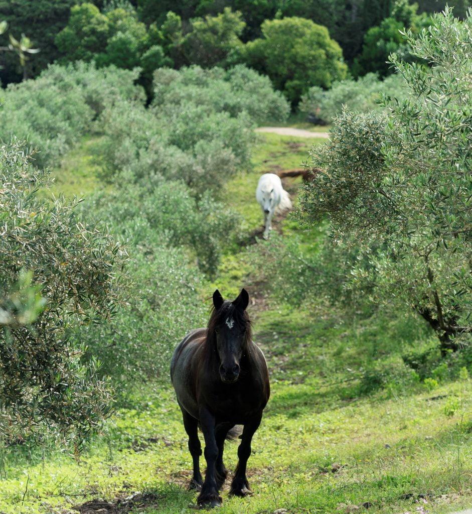 Domaine de L'Oulivie -Visite de l'oliveraie et Dégustation des huiles d'olive