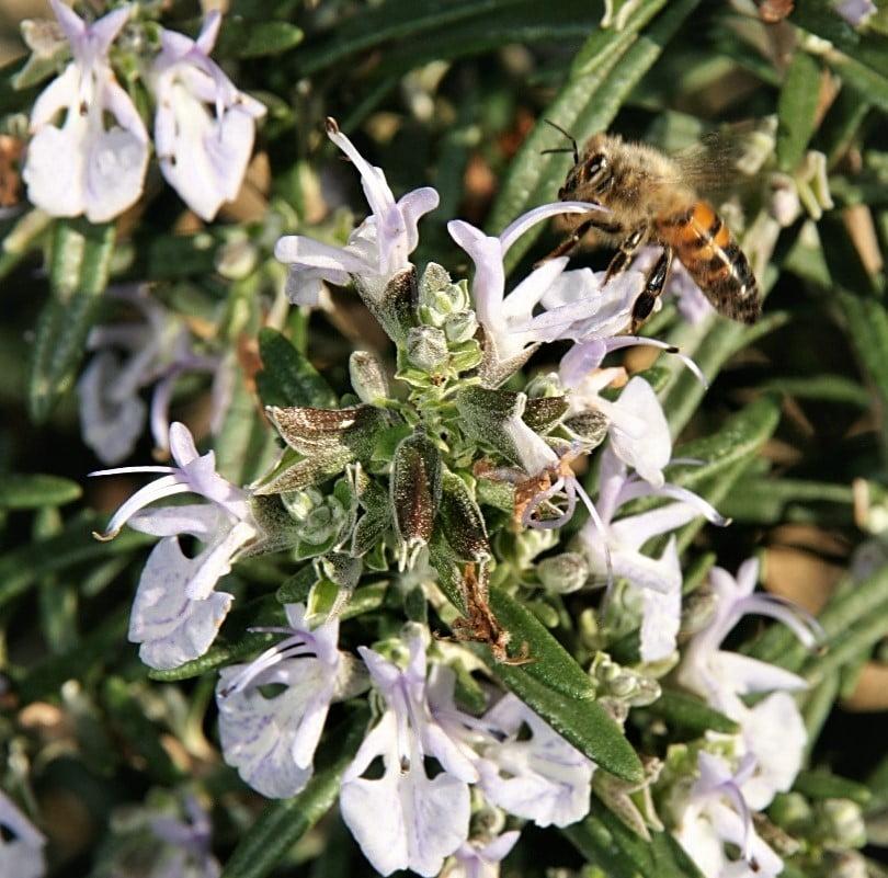 Ateliers sur les vertus des plantes aromatiques